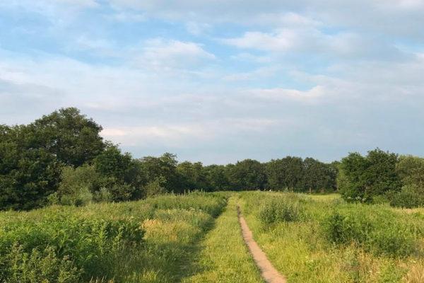 landschapje